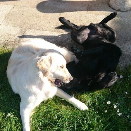 perros-jugando