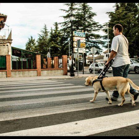 perro-cruzando