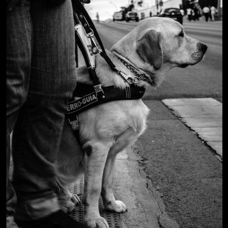 perro-asist-disc-visual