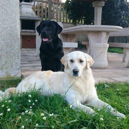 perros-jardin