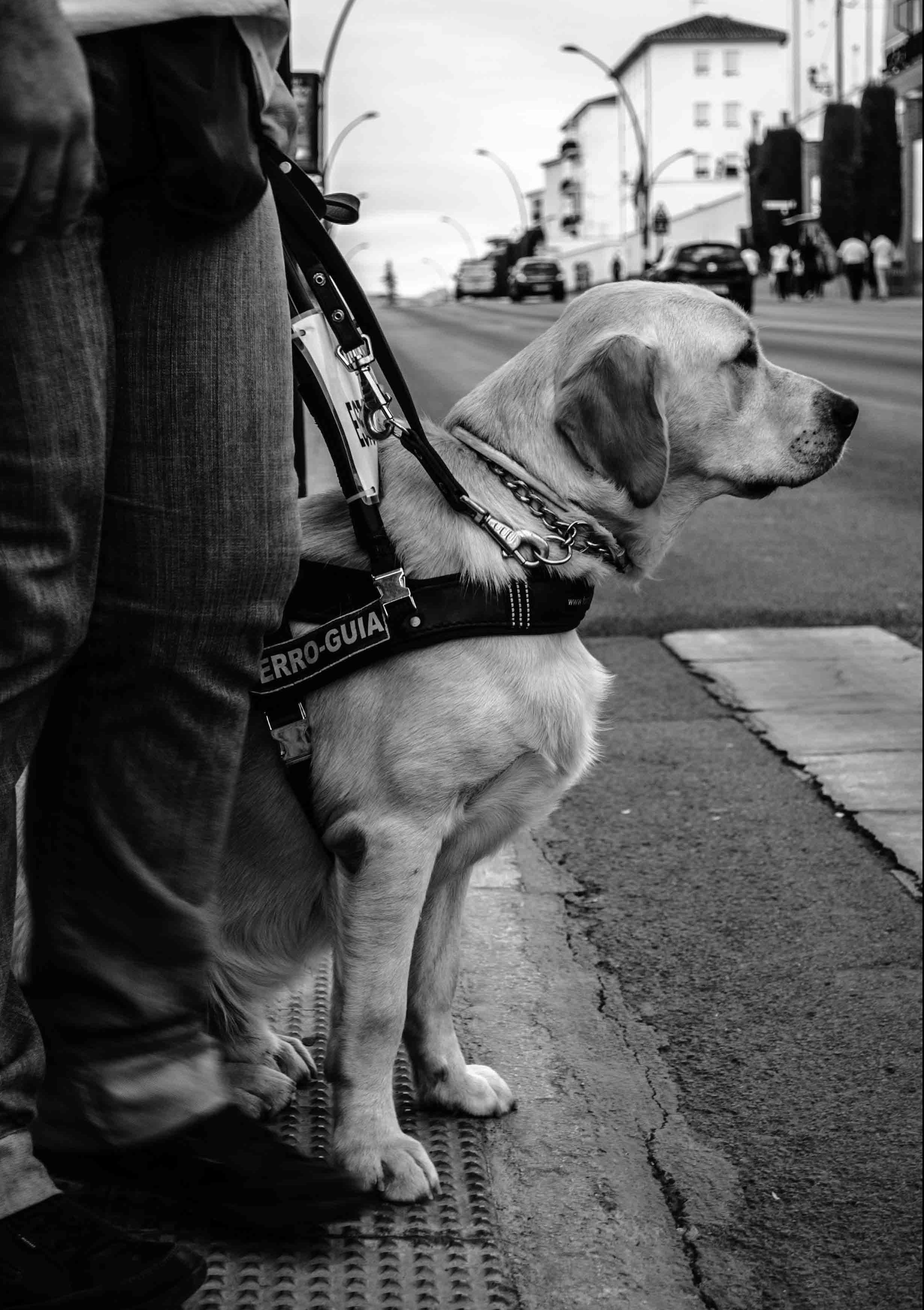 perro-guia