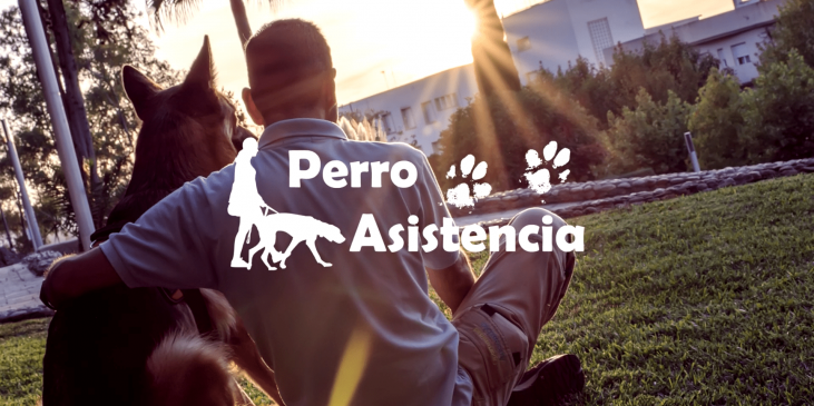 adiestramiento-social-video