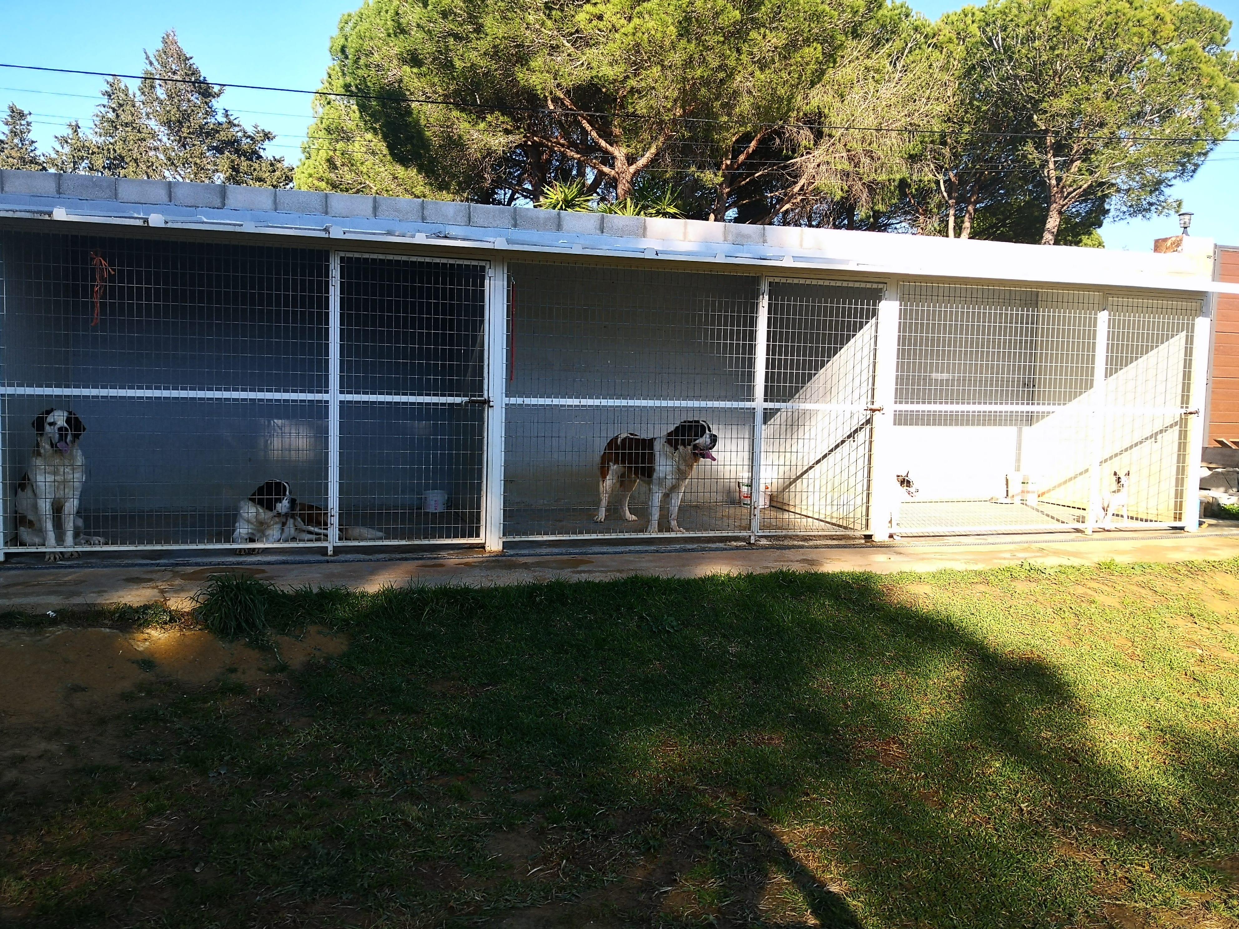 Jaulas de la estancia para perros