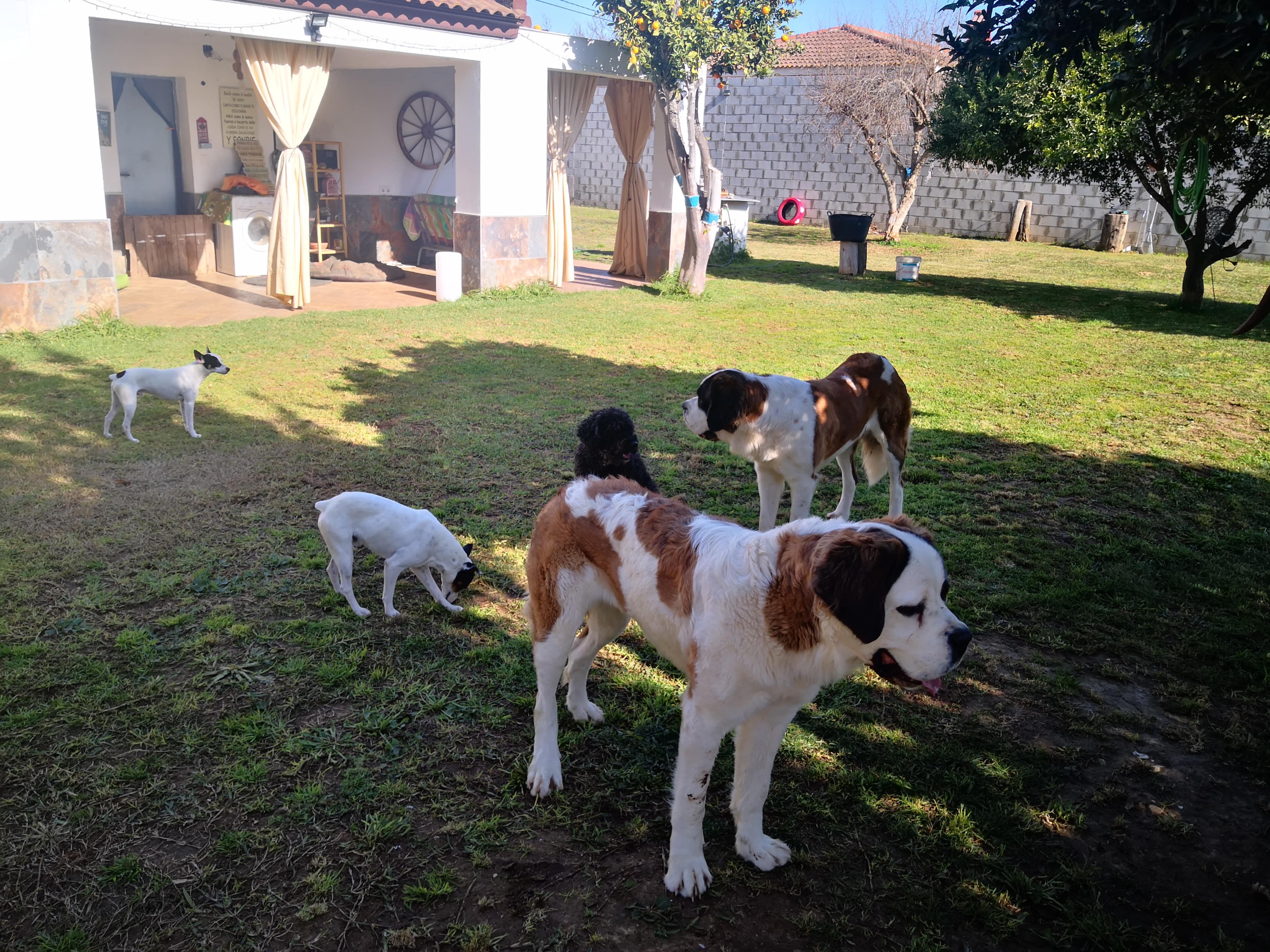 Perros jugando en la residencia para perros