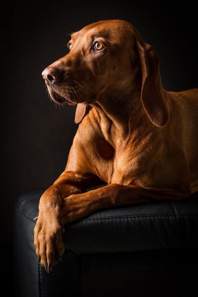 ansiedad en el perro